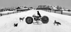 Animal farm … Pentti Sammallahti's Solovki, White Sea 2, Russia (1992)
