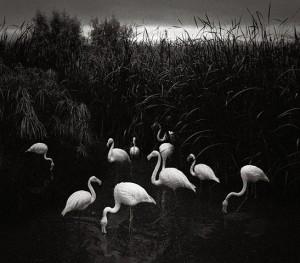 Birds by Pentti Sammallahti