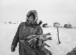 The Nenets' diet is based on reindeer meat and fish