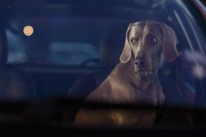 Martin-Usborne-Hector-Dogs-in-Cars