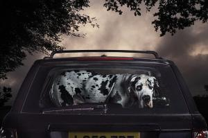 The Silence of Dogs in Cars by Martin Usborne (05)