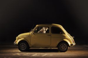 The Silence of Dogs in Cars by Martin Usborne (08)