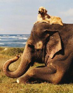 Dog-and-Elephant