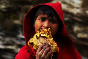 Young Nepalese boy eating honeycomb