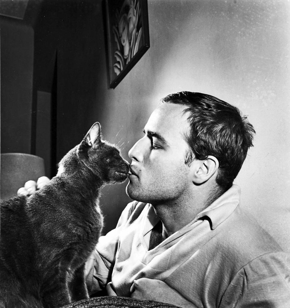 Brando cheating on previous kitty.