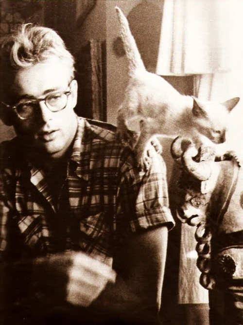 James Dean. cool with cats.