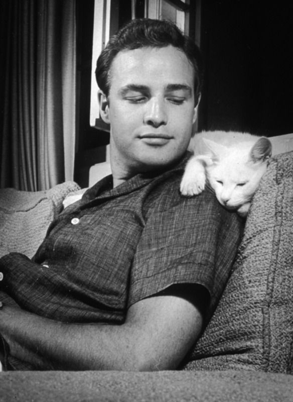 Brando and kitty