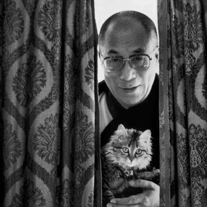 Dalai Lama, cat guy.