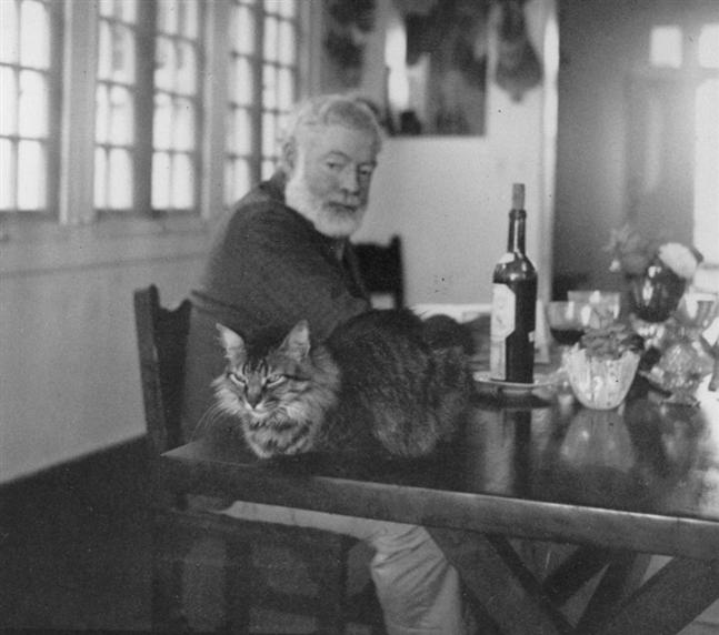Ernest Hemingway with a Maine Coon